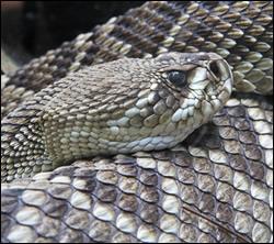 Snake control in Elizabethtown
