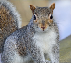 Squirrel control in Elizabethtown